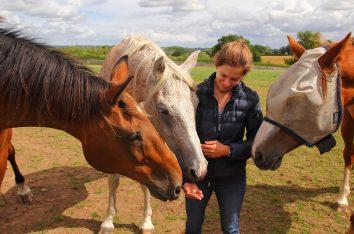 Horses 4 - Kelcie's Treats