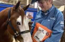 Horse rider and horse eating kelcie's horse treats   Kelcie's Treats